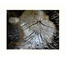 Old and weathered tree trunk  Art Print