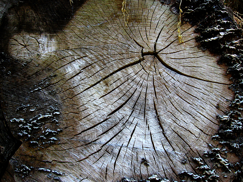Old and weathered tree trunk  by steppeland