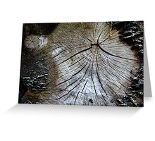 Old and weathered tree trunk  Greeting Card