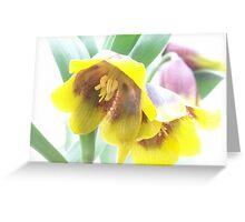 Fritillaria michailovskyi Greeting Card