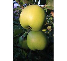 Alma (apple) Photographic Print