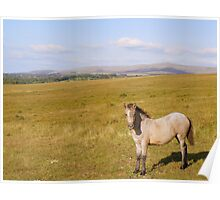 Dartmoor: Pony on Gibbet Hill Poster
