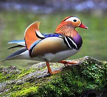 The Mandarin by Dominic  Jones