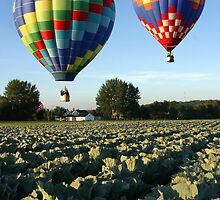 Hot Air Balloons Over a Cabbage Field Beside Marble Street, Sussex by Jamie Roach