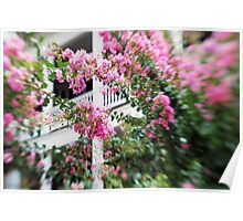 Pink & White Poster