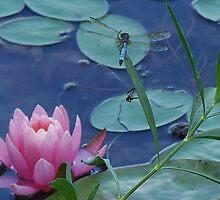 Dragon Flower by Monnie Ryan