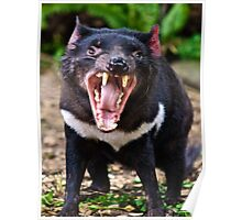 Tassie Devil making friends Poster