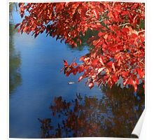 Silky Oaks Reflections Poster