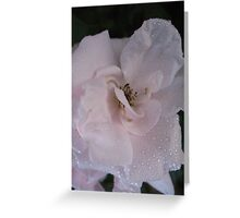 A slip of a Rose Greeting Card