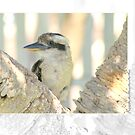 Kookaburra by Holly Kempe