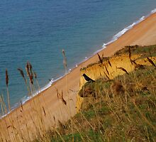View From The Cliff by rumisw