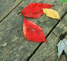 Leaves on boardwalk by tanmari