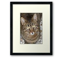 Cute Tabby Cat Portrait Framed Print