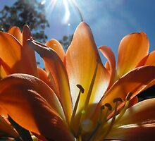 Orange Sunday by Carol Field