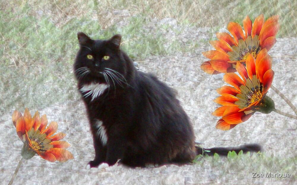 Textured Tuxedo Cat by Zoe Marlowe