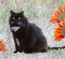 Textured Tuxedo Cat by digitalmidge