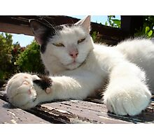 Black and White Bicolor Cat Lounging on A Park Bench Photographic Print