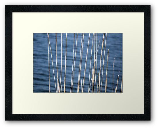 The Lines of Nature by Brian Gaynor
