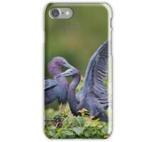 Little Blue Herons  iPhone Case/Skin
