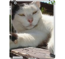 Black and White Bicolor Cat Lounging on A Park Bench iPad Case/Skin