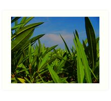 From the Grass  Art Print