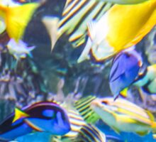 Colorful Tropical Fish Sticker