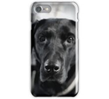 Black and Lab iPhone Case/Skin