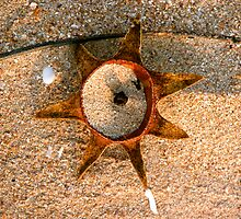 Fallen Star.. by Lynette Higgs