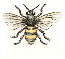 Buzy the Bee by PuddlePaints