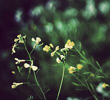 Yellow flowers by KerrieMcSnap