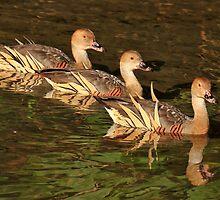 Three Little Ducks All in a Row by Ann  Van Breemen
