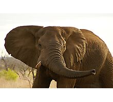Elephant at Kruger Parc Photographic Print