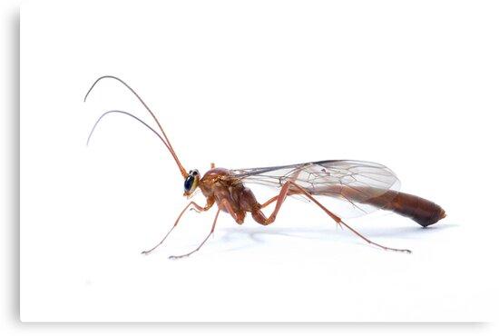 Parasitic Wasp by Frank Yuwono