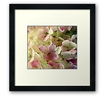 Romance in Pink and Green Framed Print