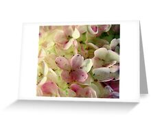 Romance in Pink and Green Greeting Card