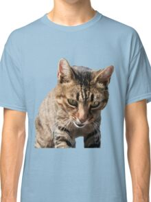 Tabby Back Looking Down Background Removed Classic T-Shirt