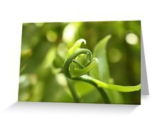 New Growth in Late Summer Greeting Card