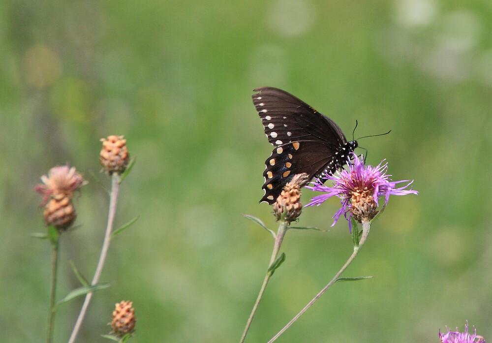 Butterfly Buffet by Geno Rugh