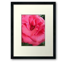 Five Dollar Rose  Framed Print