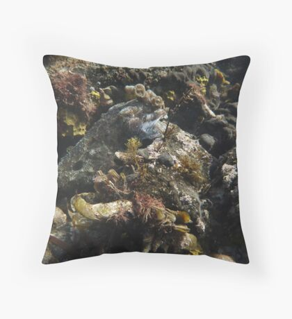 Giant Australian Cuttlefish camouflage - Black Point, Whyalla Throw Pillow