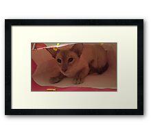 Gabriel Siamese Cat Gift Bag Framed Print