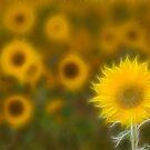 Summer fractals! by Carole Stevens