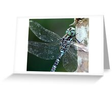 Canada Darner Portrait Greeting Card