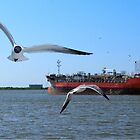 The Birds at Galveston by LarryB007