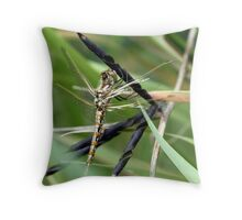Variegated Meadowhawk Hanging on Seed Pod Throw Pillow
