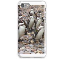 Humboldt Penguin Party iPhone Case/Skin
