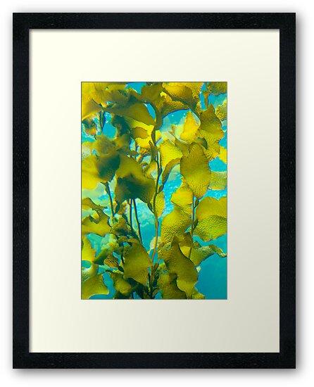 Kelp Forest by Leroy Laverman