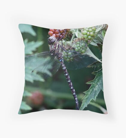 Shadow Darner on a Red Blackberry Throw Pillow