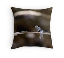 Dot-Tailed Whiteface Resting on Grass Stem Throw Pillow