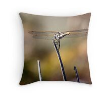 Variegated Meadowhawk Under the Sun Throw Pillow